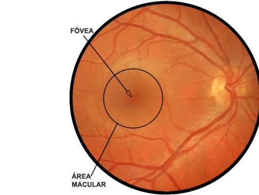 area macular