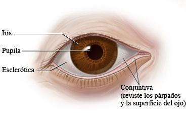 Los hinchazones bajo los ojos el ojo derecho