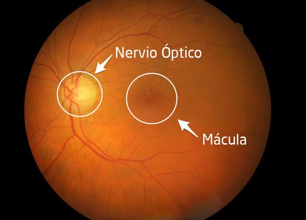 Mácula ocular: qué es y qué función desempeña