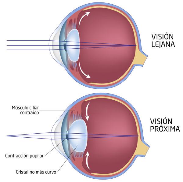 El cristalino del ojo: anatomía, funciones y enfermedades