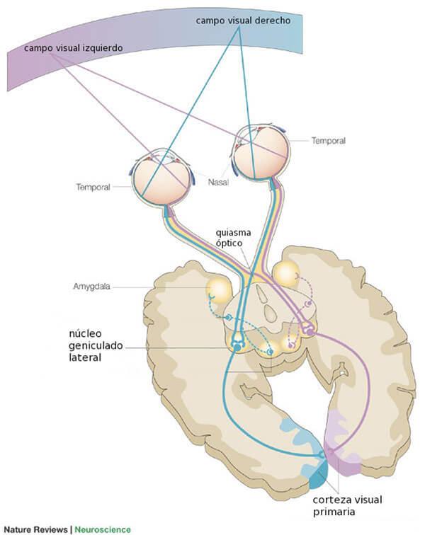 Sistema Visual Central