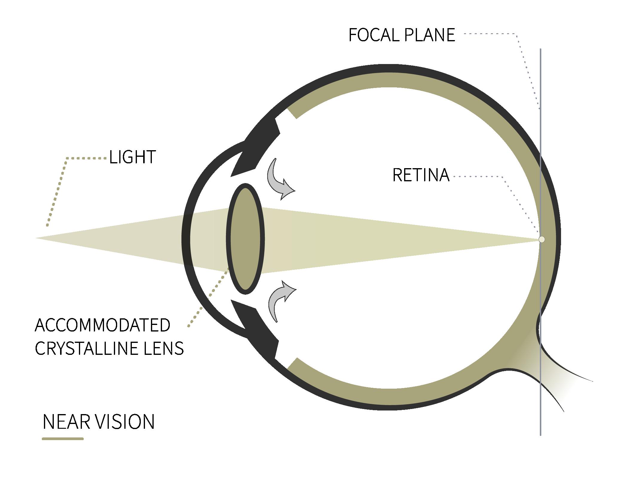 near vision rahhal eye anatomy